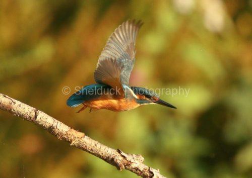 Kingfisher k2