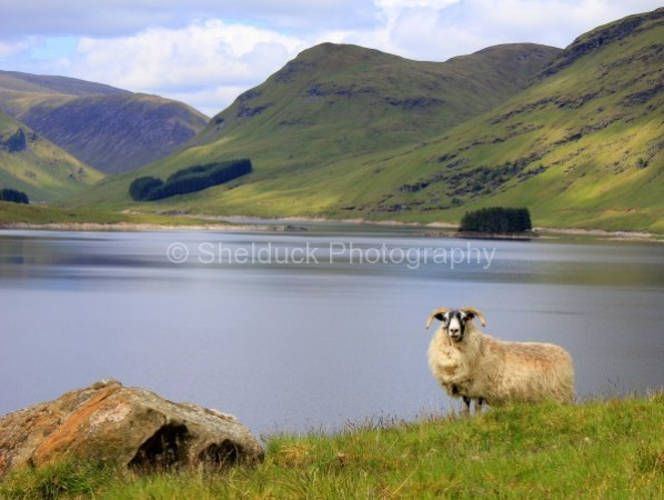 Loch an Daihm, Scotland