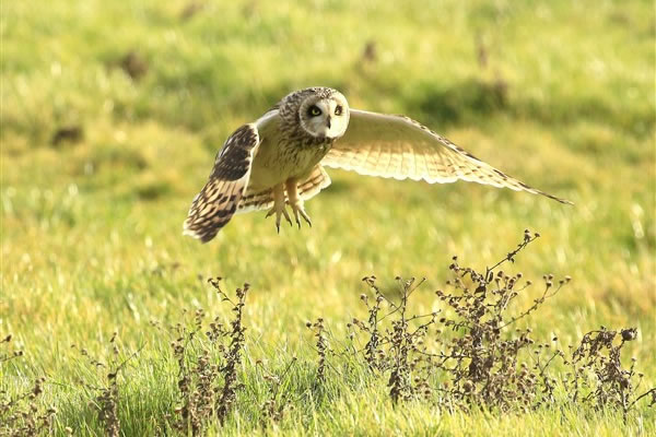 Owls and birds of prey photography for sale on Exmoor