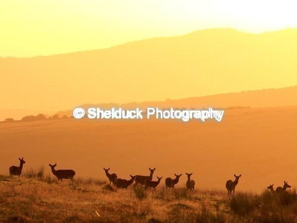 Early Morning on Exmoor