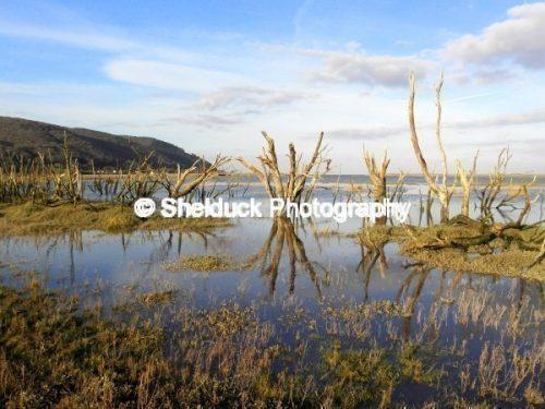 Sparkhayes Marsh, Exmoor